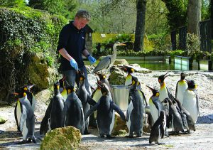 Feeding the Penguins