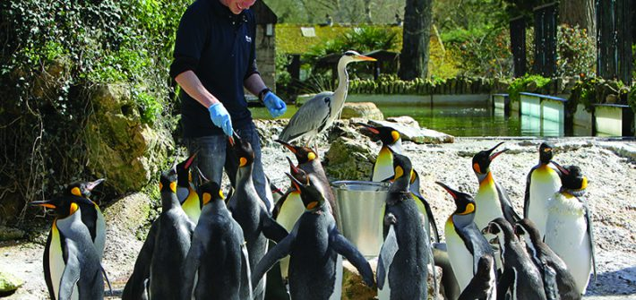Feeding the Penguins