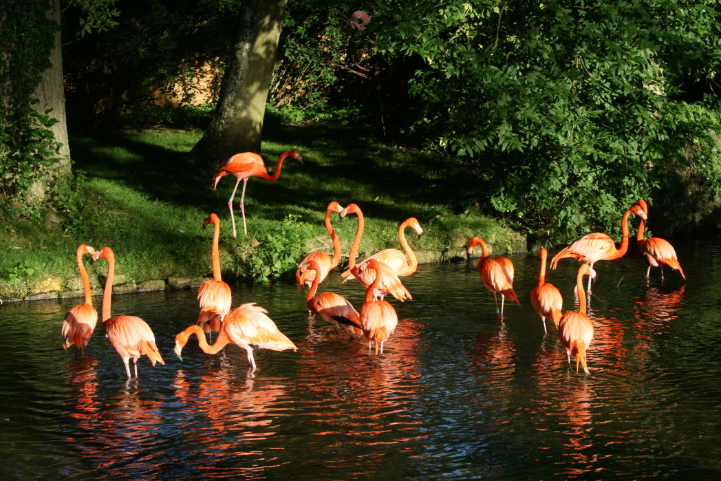 Flamingo River