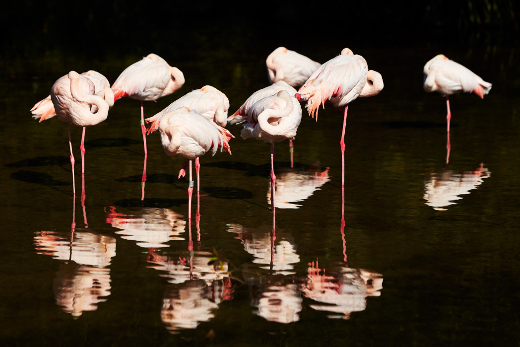 Visit us and the flamingos here at Birdland Park and Gardens