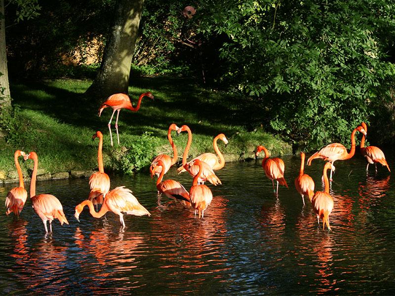 Flamingos at Birdland Park & Gardens