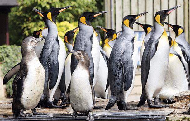 LGBirdland111 2 - Celebrate Penguins at Half Term