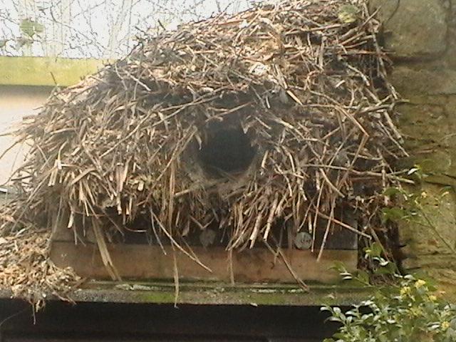 hammerkop nest 3 2 - Week 11 - It's all in the Planning