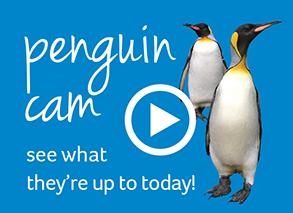 pen cam but 2 - penguin shore