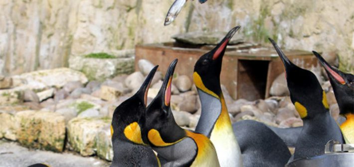 Penguins, Birdland Park and Gardens