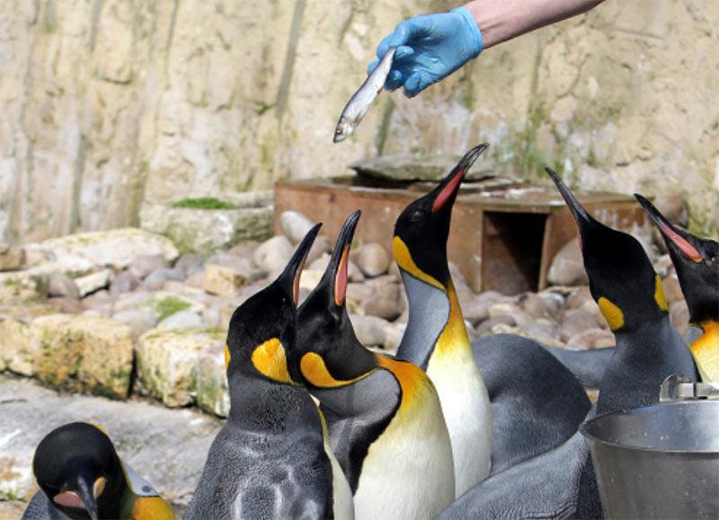 Penguins, Birdland Park and Gardens