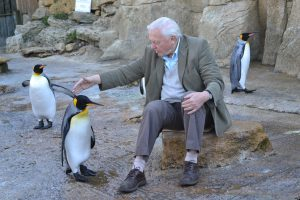 DSC 0015 300x200 - Sir David Attenborough visits Birdland