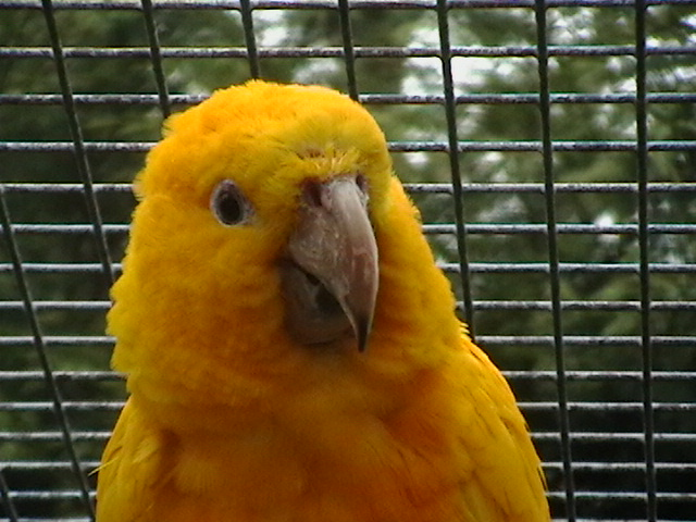 golden conure 1 2 - Spring is in the Air!