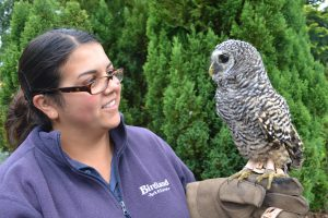 Helen Perry and Chaco Owl 300x200 - International Owl Awareness Day!