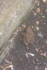 Toad (7)