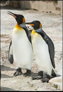 missy seth 2 206x300 - Is British King Penguin World's Oldest?