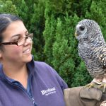 Chaco Owl 2013 (27) (Small)