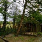WP 20140128 001 Small 150x150 - Species Spotlight - Grey Treepie