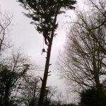 WP 20140129 001 Small 150x150 - Species Spotlight - Grey Treepie