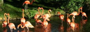 Whats On Today 300x106 - View Our Live Flamingo Webcam
