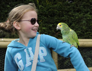 Birdland Become a Perch for a Parrot 300x233 - What's on at Birdland for May Bank Holiday Weekend