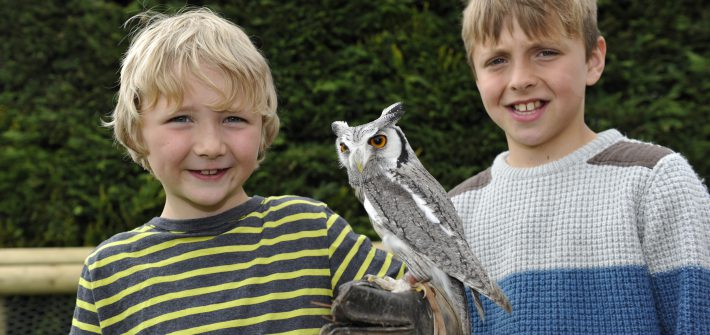 Birdland Close Encounters at Meet the Keeper session 1 710x335 - Summer Family Fun - Day out at Birdland