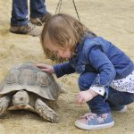 Birdland - Giant Tortoises