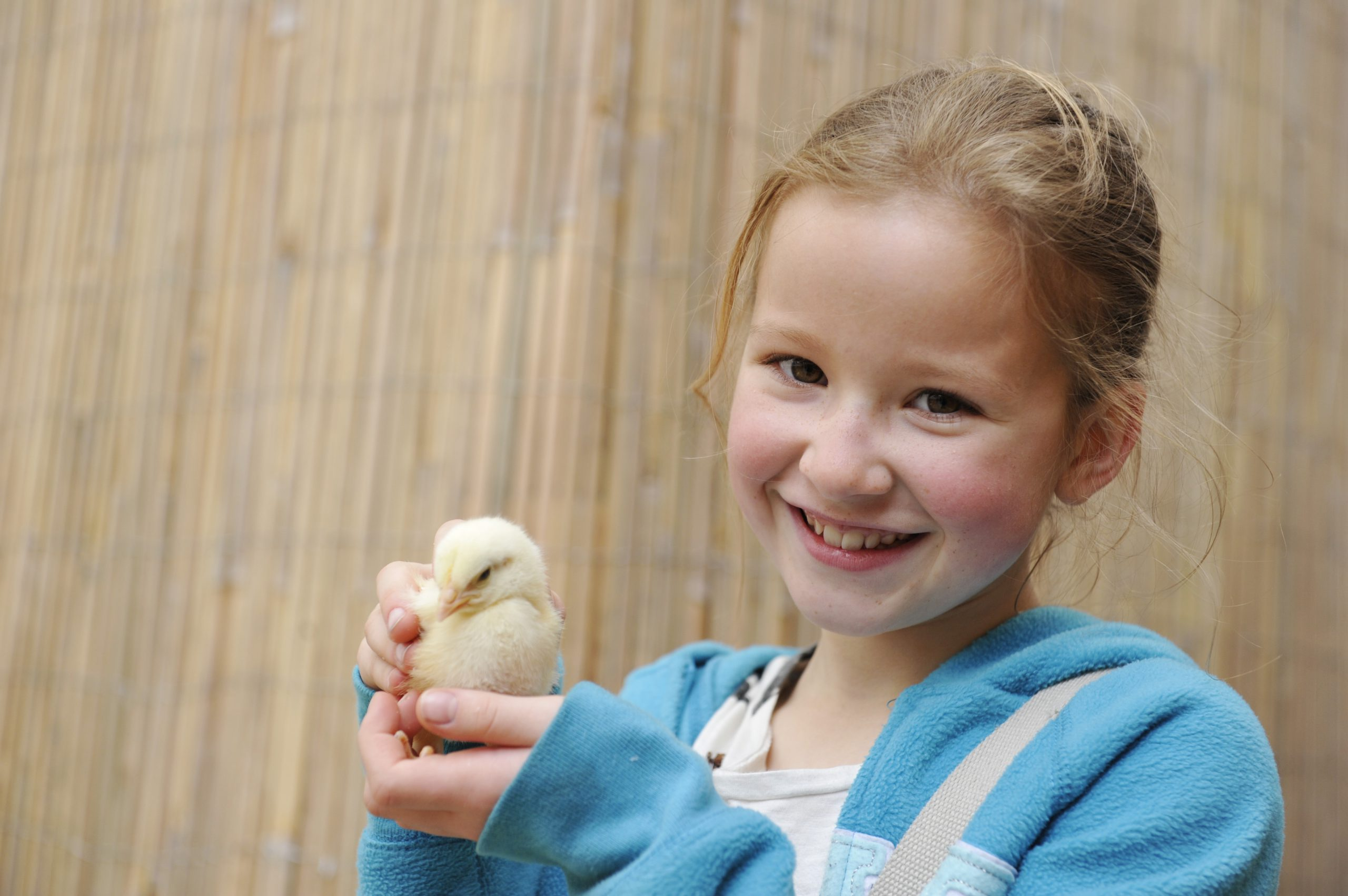 Birdland Meet Chicks at the New Hatchery 1 scaled - What's on at Birdland for May Bank Holiday Weekend