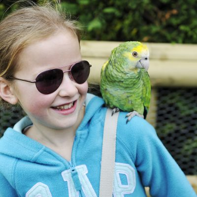Meet the Parrots at Birdland Park & Gardens