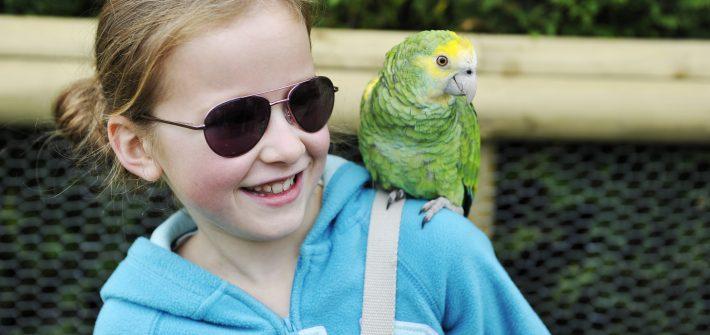 Meet the Parrots at Birdland Park & Gardens