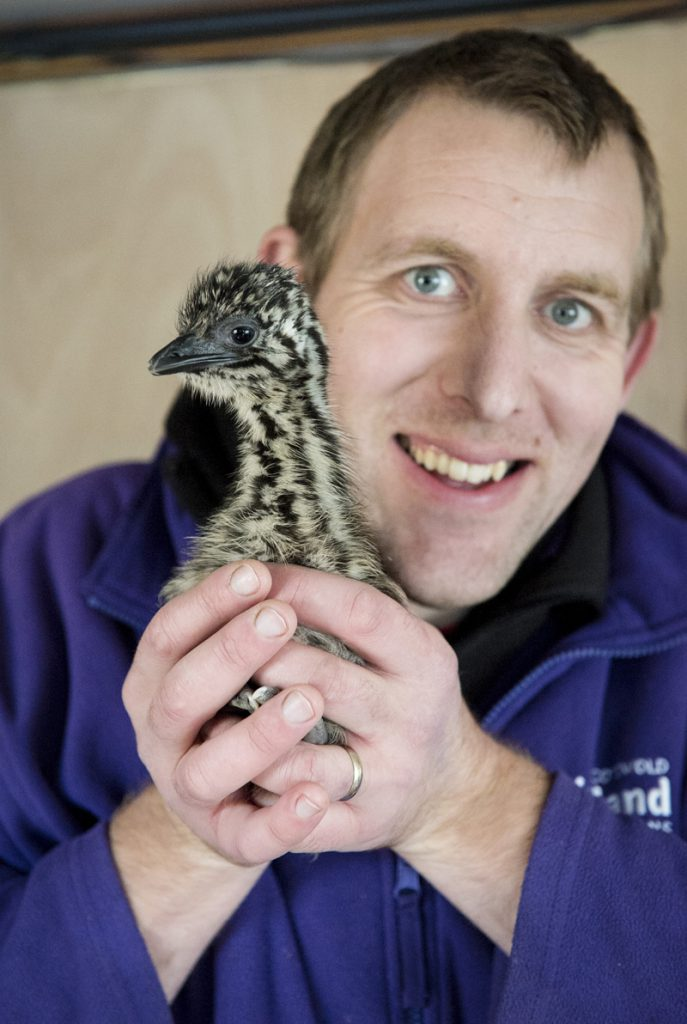 Keeper Al with the Emu chick