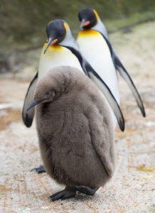 PENGUIN CHICK at Birdland