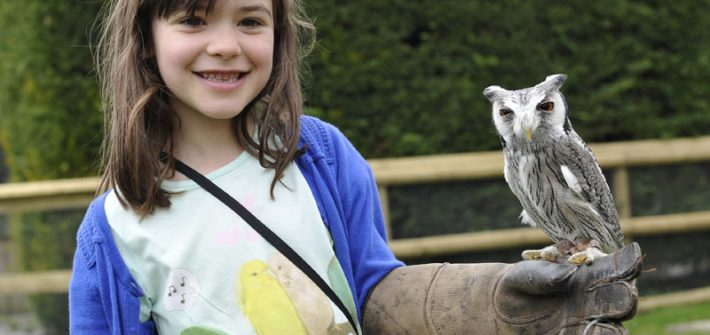 Meet the Owls at birdland
