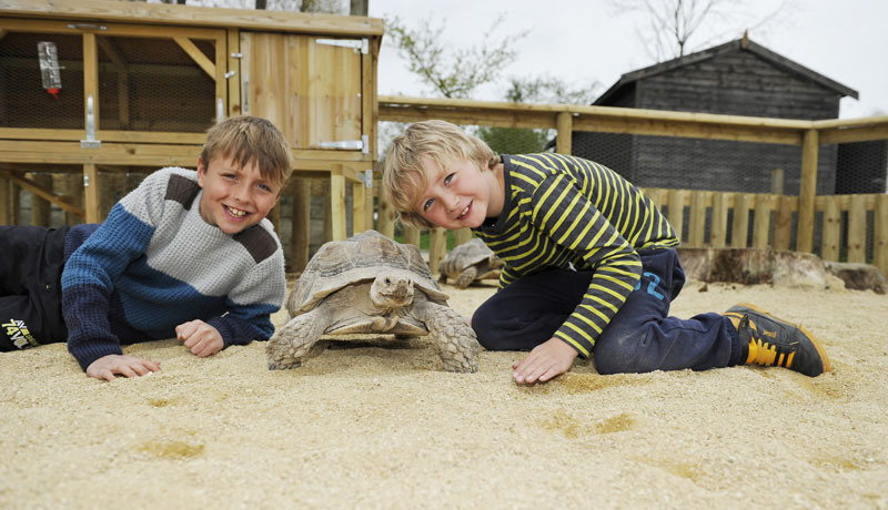 Birdland Meeting the Giant Tortoises 1 - Close Encounters May Half Term Fun!
