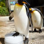 Penguins Cool off on ice