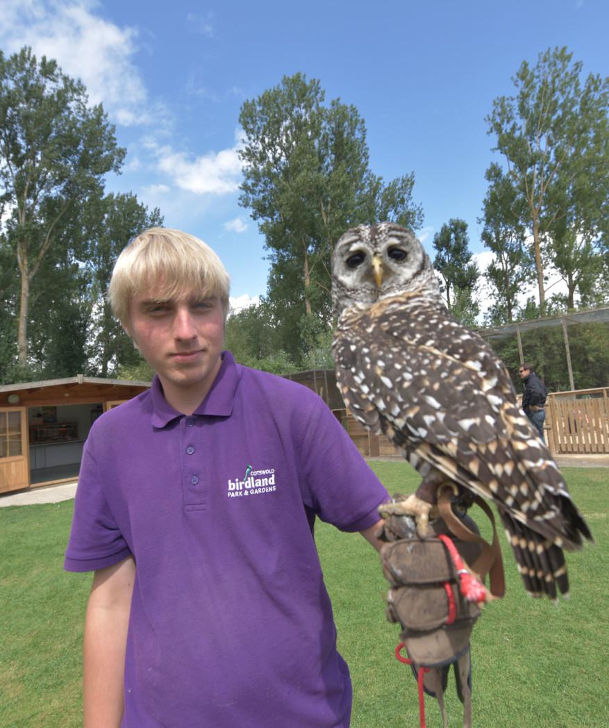 Owl at Birdland 1 - Myths & Legends at Birdland October Half Term