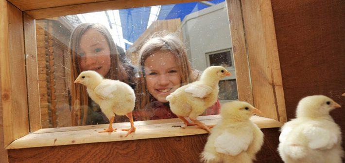 Easter chicks at Birdland 1 710x335 - Eggciting Easter at Birdland!