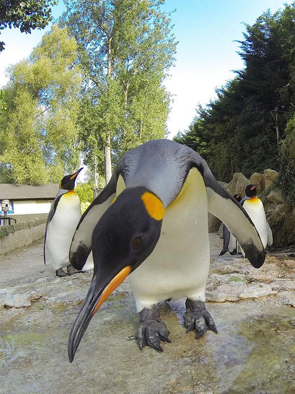 King Penguin Behaving Badly February Half Term 1 - Celebrate World Penguin Day!