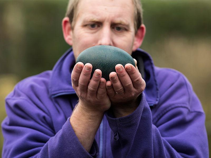 Penguin egg 1 - Real Easter Eggs at Birdland Park & Gardens