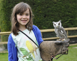 girl encounters an owl