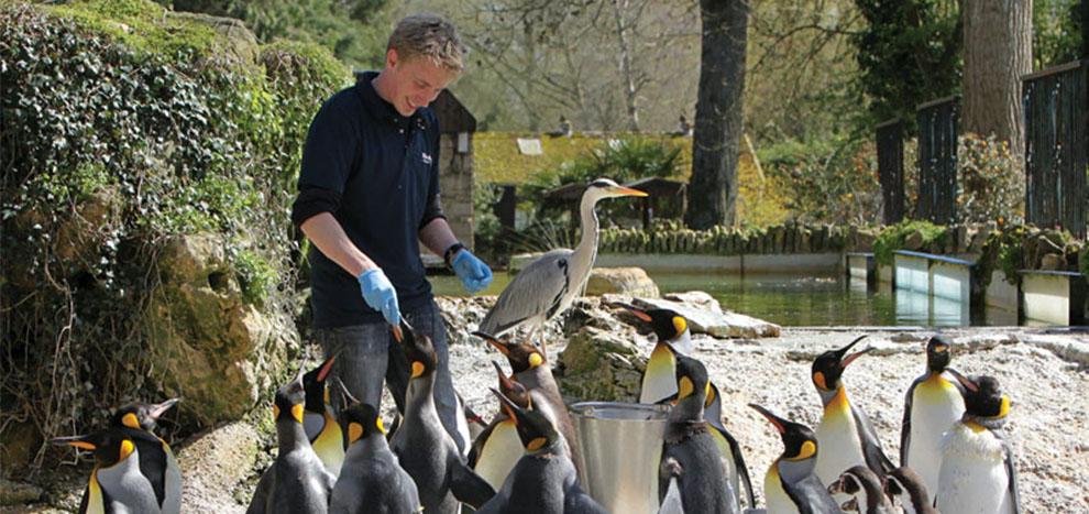 Feeding the penguins 1 - 2.30 Penguin Feeding Display at Birdland