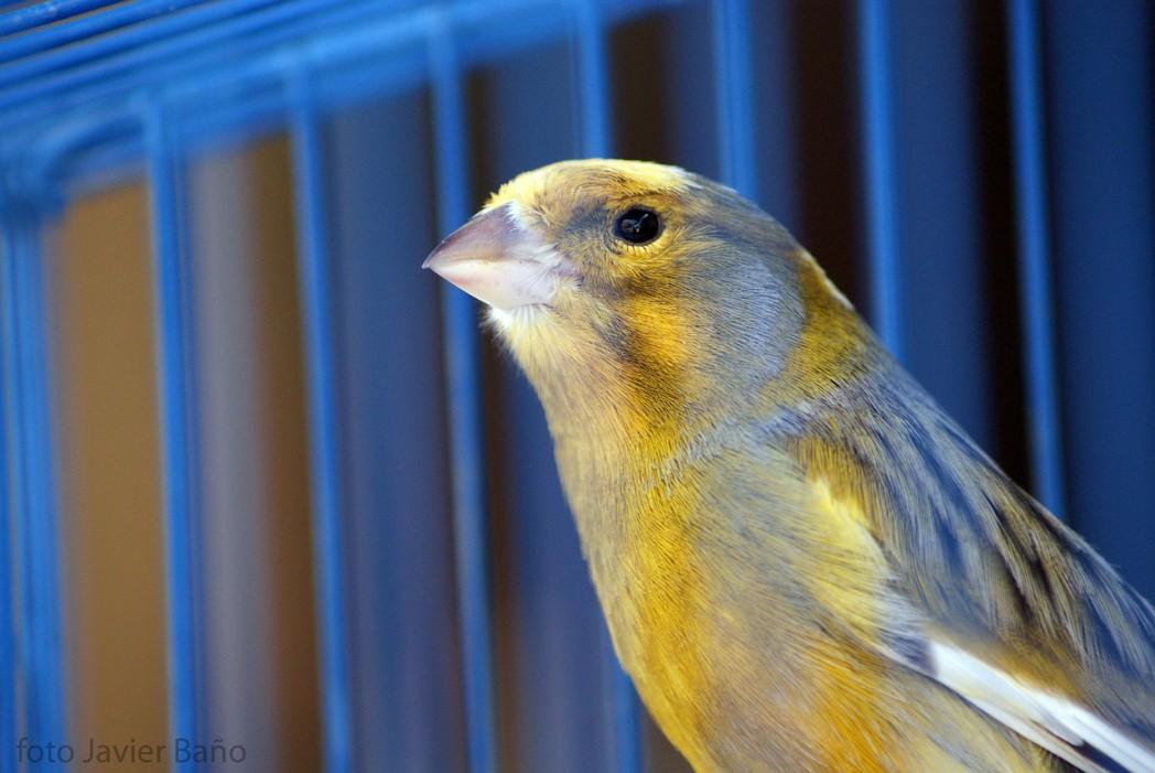 canary 20522 1280 1 - Canary (Domestic)