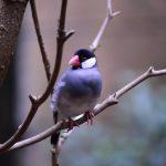 java sparrow 231228 1280 1 150x150 - Java Sparrow