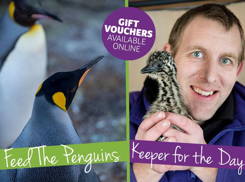 Feed the penguins gift idea 2