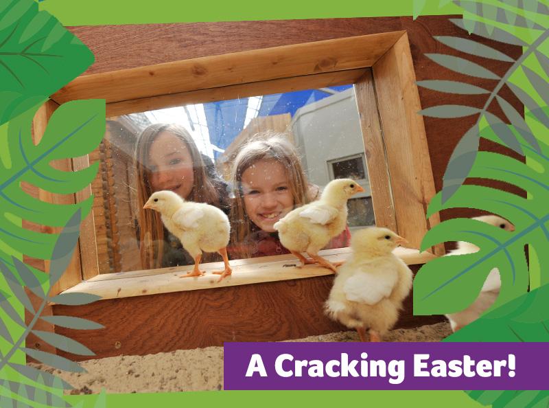 Cracking easter 1 - A Cracking Easter at Birdland