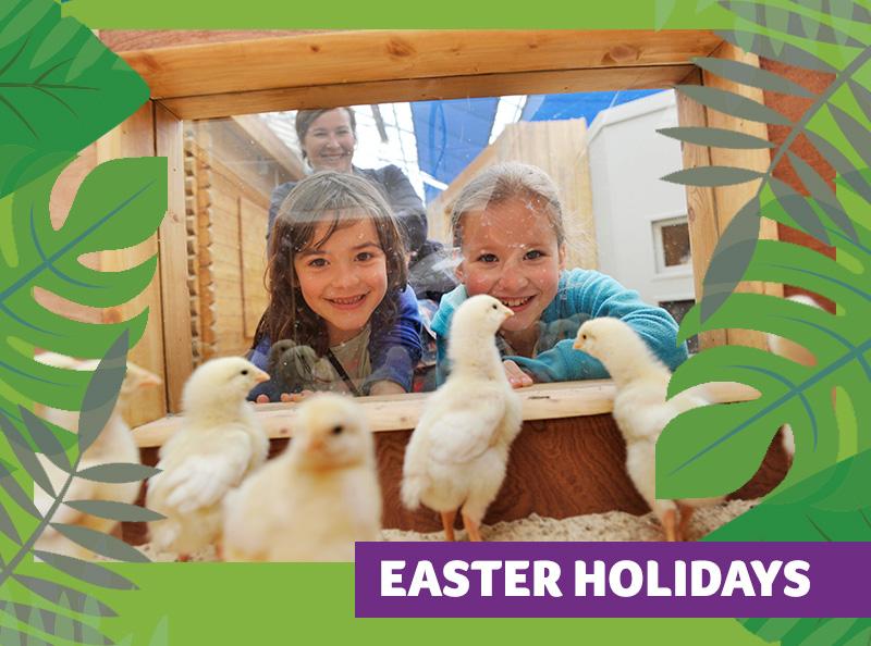 Easter Holidays 2 1 - Cracking Easter at Birdland Park & Gardens