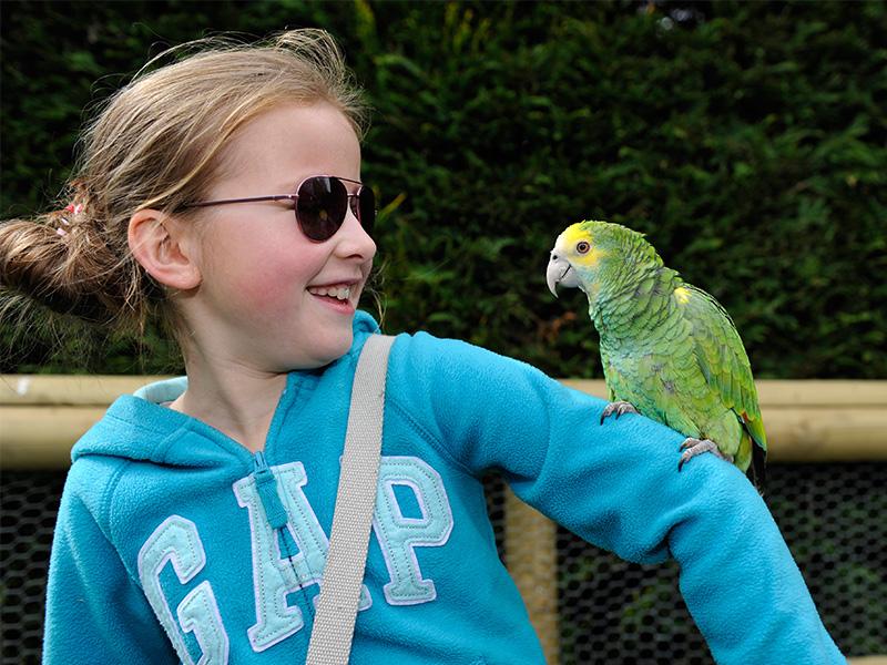 Summer Fun at Birdland
