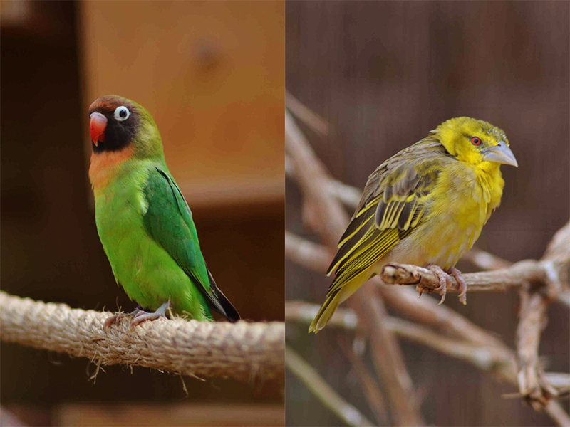 African birds at Birdland Park & Gardens, Cotswolds.