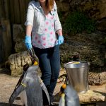 Feeding the penguins at Birdland