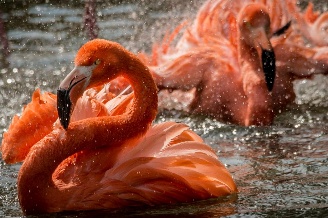 Flamingo Facts at Birdland