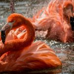What's On at Birdland Flamingos