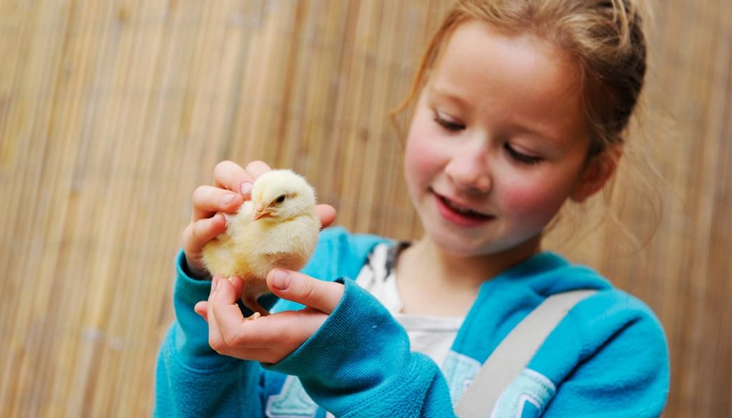 Egg chicks at Birdland Park & Gardens