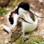 Mother's Day at Birdland