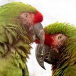 Parrots at Birdland Park & Gardens