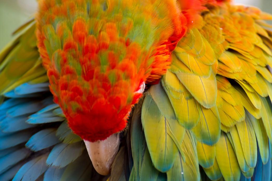 Flamingo Feathers at Birdland Park and Gardens, Glos